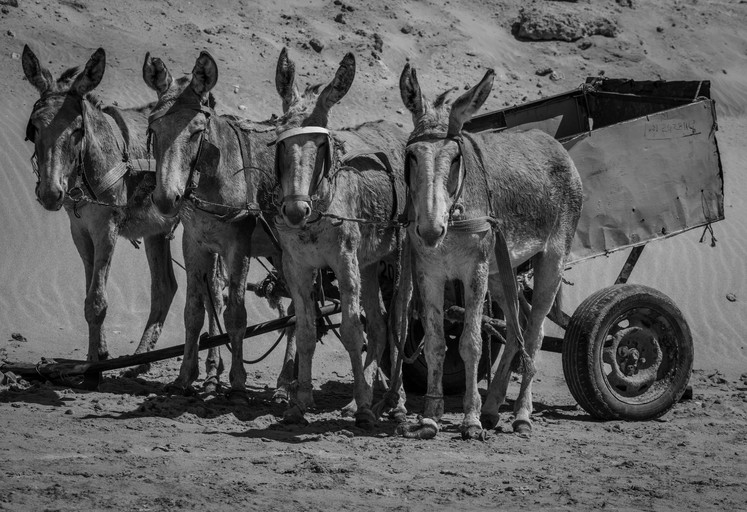 Four donkey power