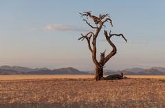 Gnarly tree in the desert