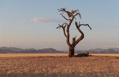 Narly Tree in the Desert