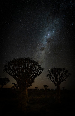 Milkyway over Quiver trees