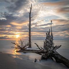 Doug Varvil drift wood sunset.jpg