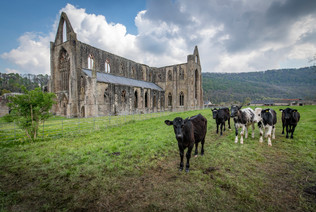 Tintern Abbey and friends