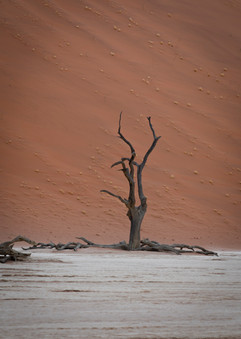 Red Dunes and dead tree