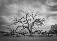 Bird in a dead tree