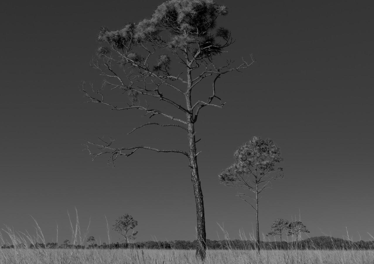Florida grasslands