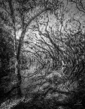 Swamp Abstract