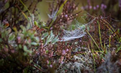 Spiderweb at dawn