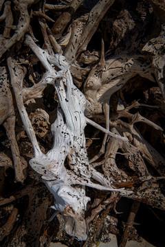 Dry driftwood among wet wood