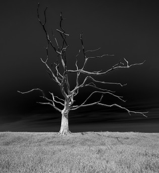 Porlock petrified trees