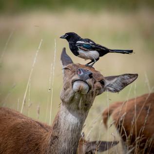A symbiotic relationship