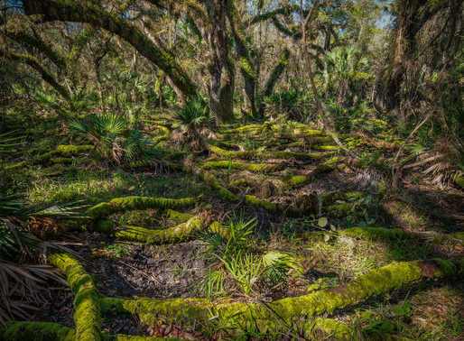 A movie set in a swamp