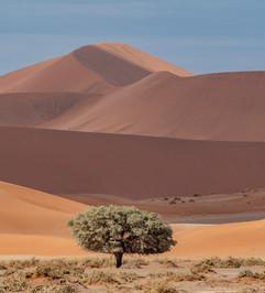 Lone Tree and Sand Dunes II