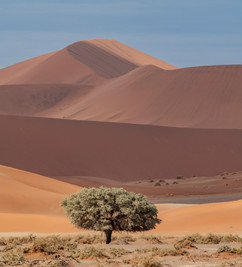 Dunes and a tree