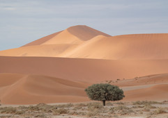 Lone Tree and Sand dunes