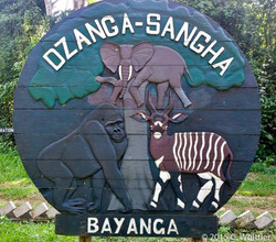 Dzanga is famous for these big 3