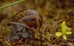 Dewy Snail
