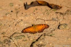 Orange moth #1383?