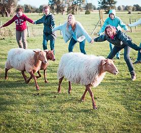 break-schapendrijven-04.jpg