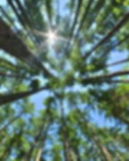 fpinnovations-banner-top-homepage.jpg