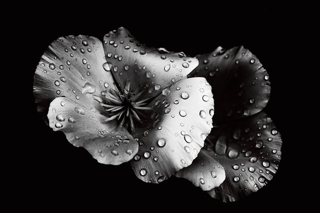 STATE - Silver Drops