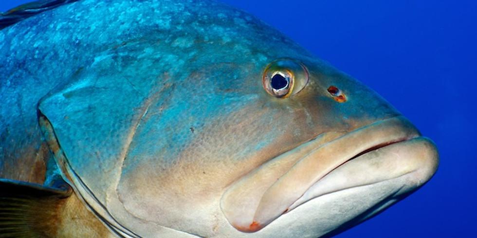 La Gabinière, un must de la plongée plongeurs Pa 60
