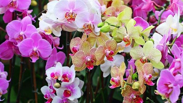 Картинка орхидеи.jpg