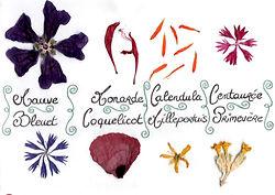 Carte herbier 2.jpg