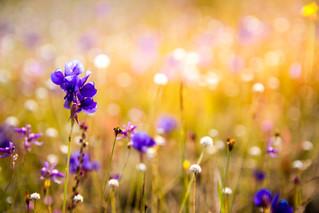 flowers-3182324.jpg