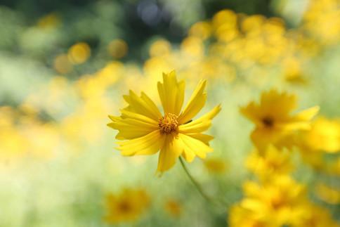 flowers-5443922.jpg