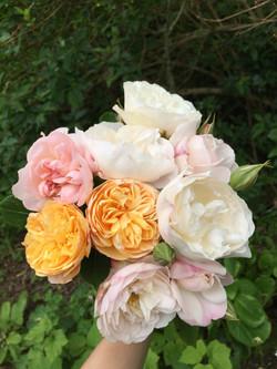 David Austen roses1