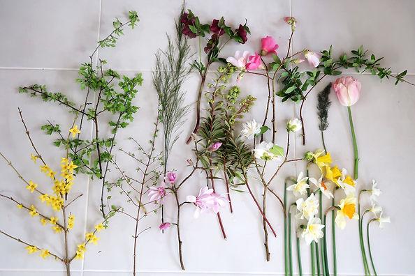 Flower stems.jpeg
