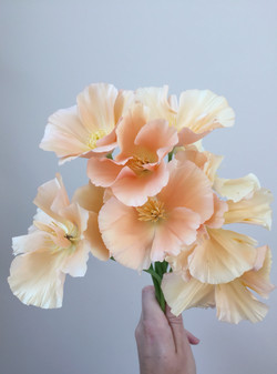 Californian poppy 2