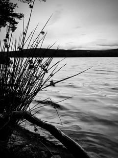 Reeds at Loch Mallachie.jpg