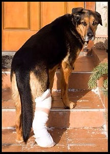 Canine Massage Therapy can help prevent injuries, and help heal current ones
