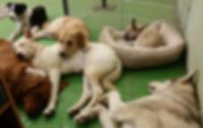 Doggy Daycare Sam's Puppy Playhouse