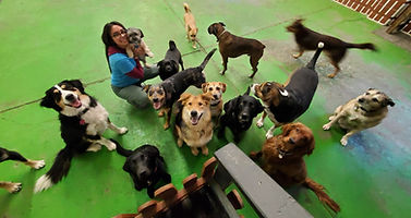 Dog Daycare Lethbridge
