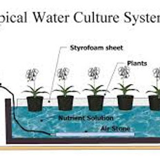Hydroponics and Growing Cannabis