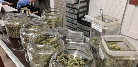 cannabis-dispensary-employee-budtender-m