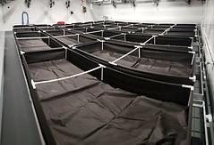 Raised Beds.JPG
