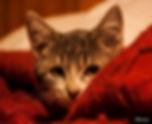 Cat 1 _.jpg