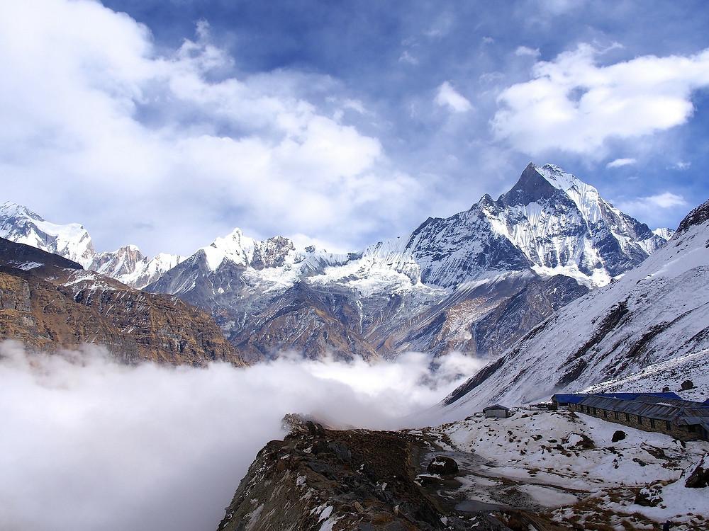 Cordyceps found in Himalayas