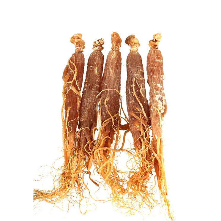 Red Korean Ginseng.png
