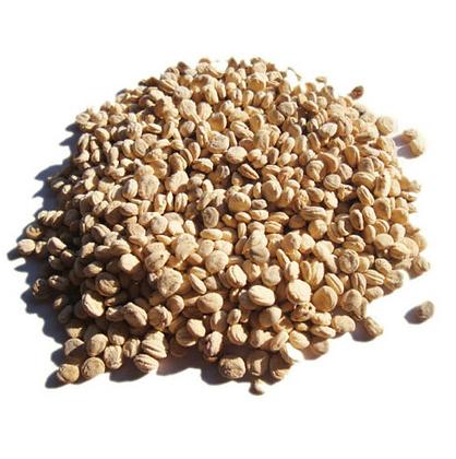 Korean (Panax) Ginseng Seeds 100 pcs