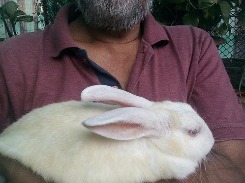 Rabbit pair for adoption