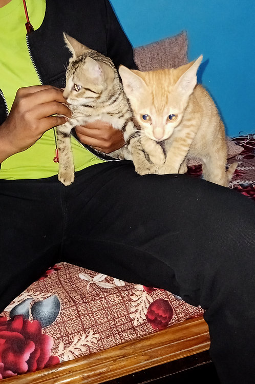 Two cats for adoption