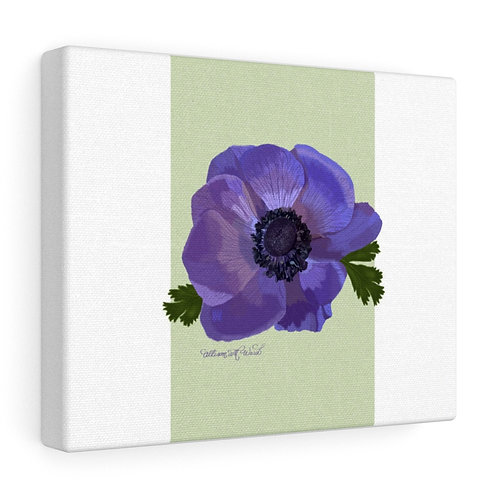 Poppy Anemone, Gallery Wrapped Canvas
