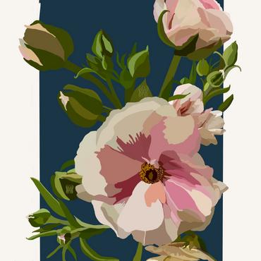 Pink Ranunculus on Navy