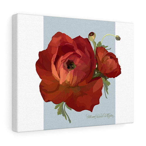 Red Ranunculus on Blue, Canvas Gallery Wrap