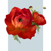 Red Ranunculus