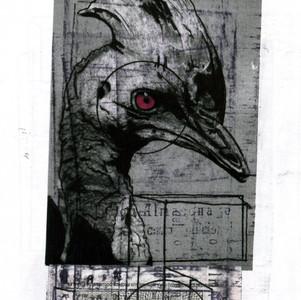 Untitled (Cassowary)